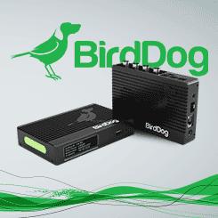 <b>BirdDog 4K Quad</b>